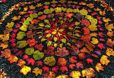 Autumn Meditation Workshop