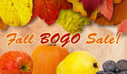 Fall BOGO Sale